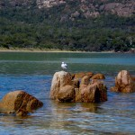 Seagull sitting on rock in ocean