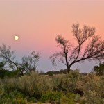 Pink sky with tree and moon