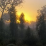 Trees in fog in sunset