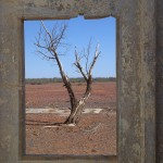 Tree seen through open window of ruined building