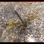 Dragonfly on the ground