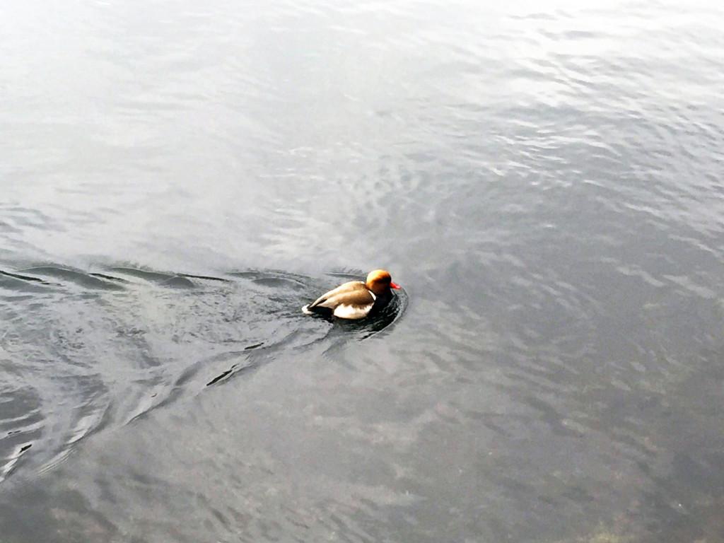 Zurich water 3