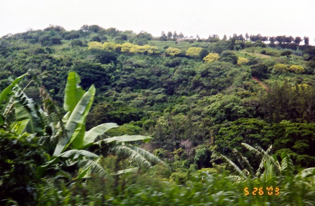 Costa rica from the bus 2