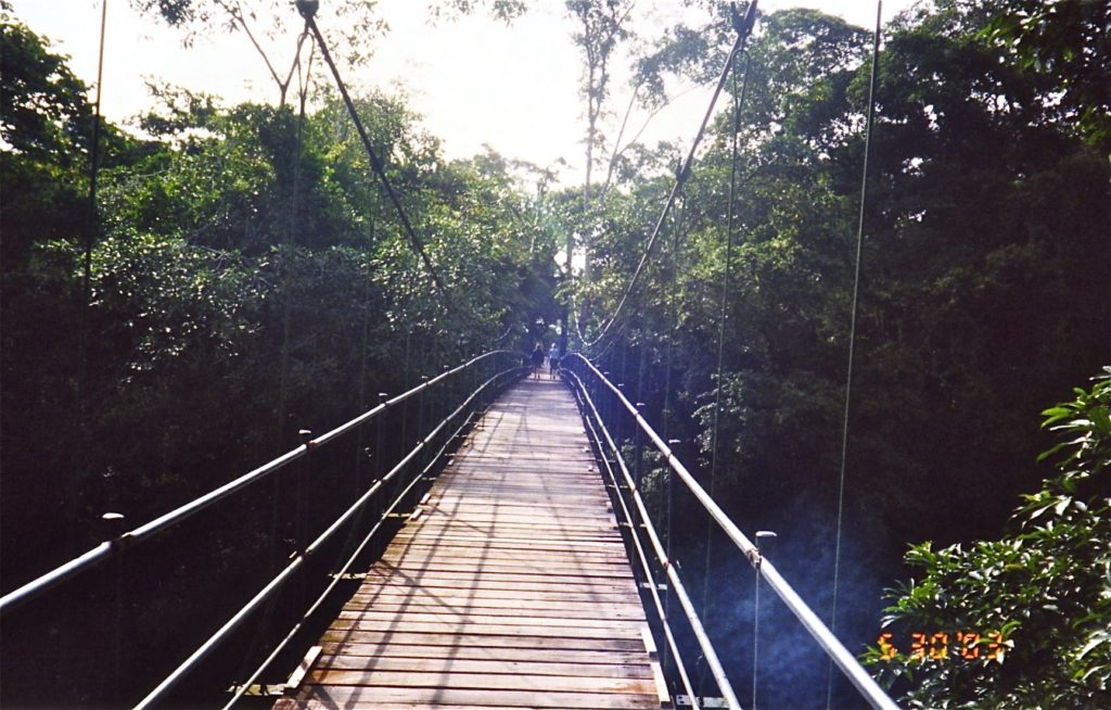 Bridge to La Selva