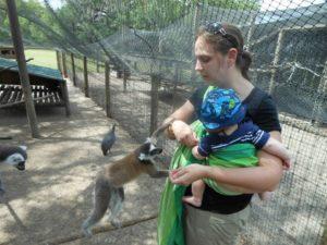 Baby and momma feeding the Lemurs