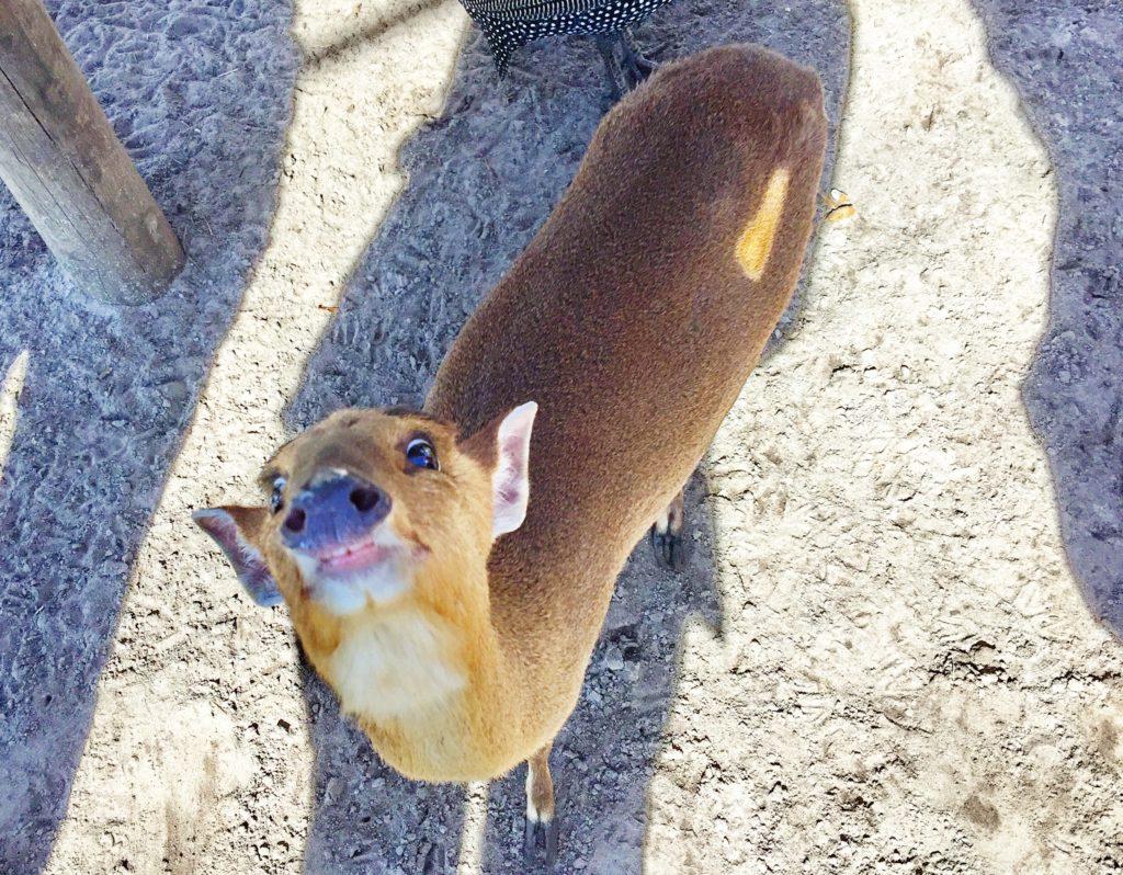 Deer thing begging for food